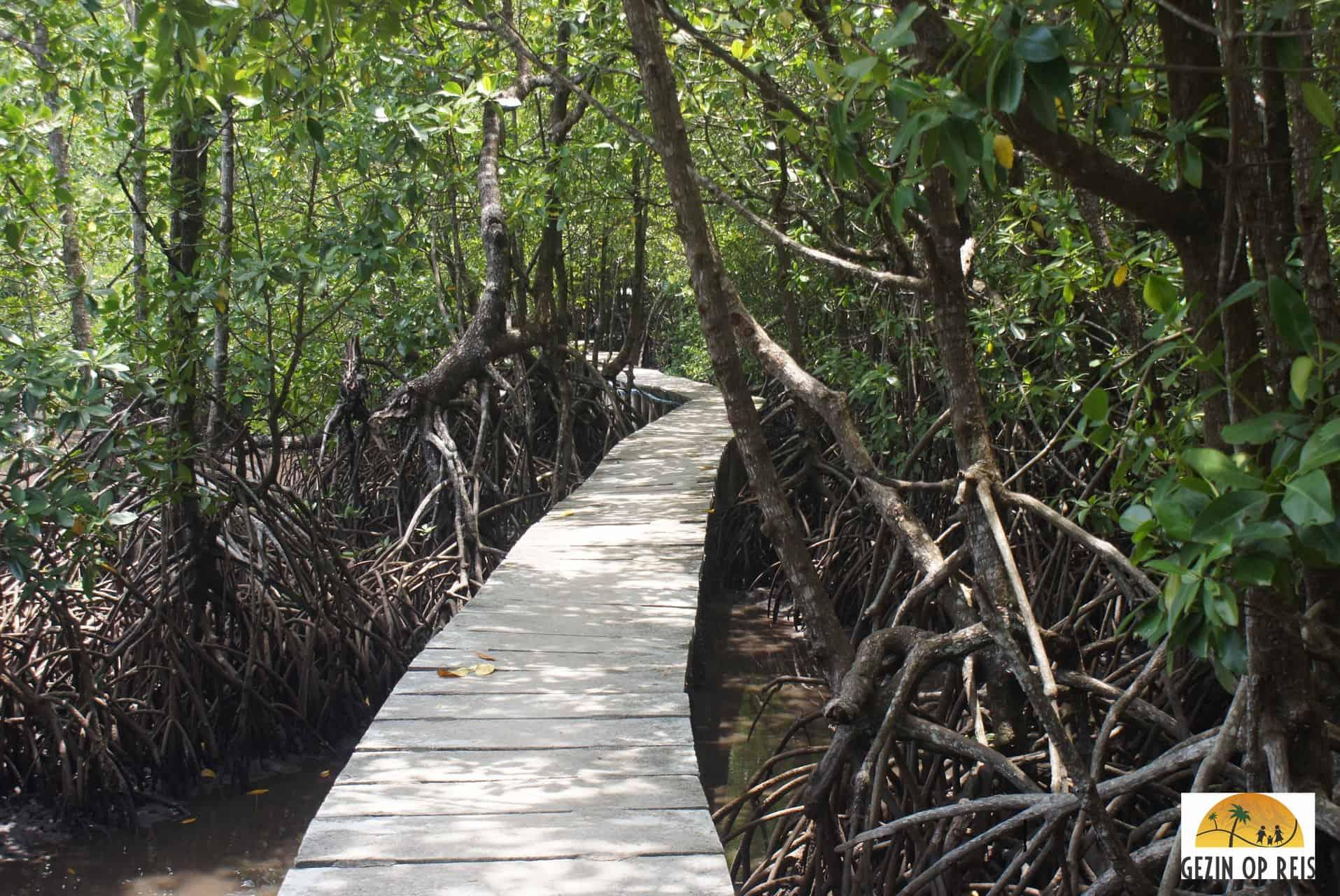 ko kong mangrove