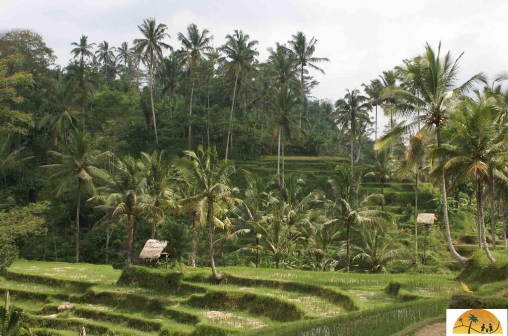 Bali voor kids