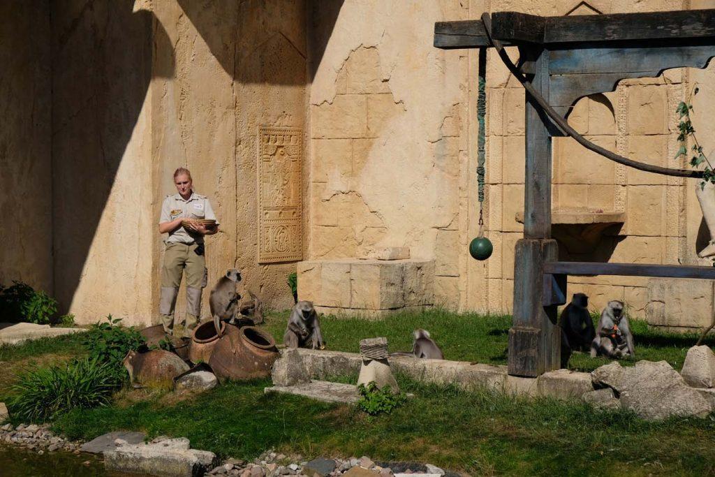 hannover met kinderen dierentuin