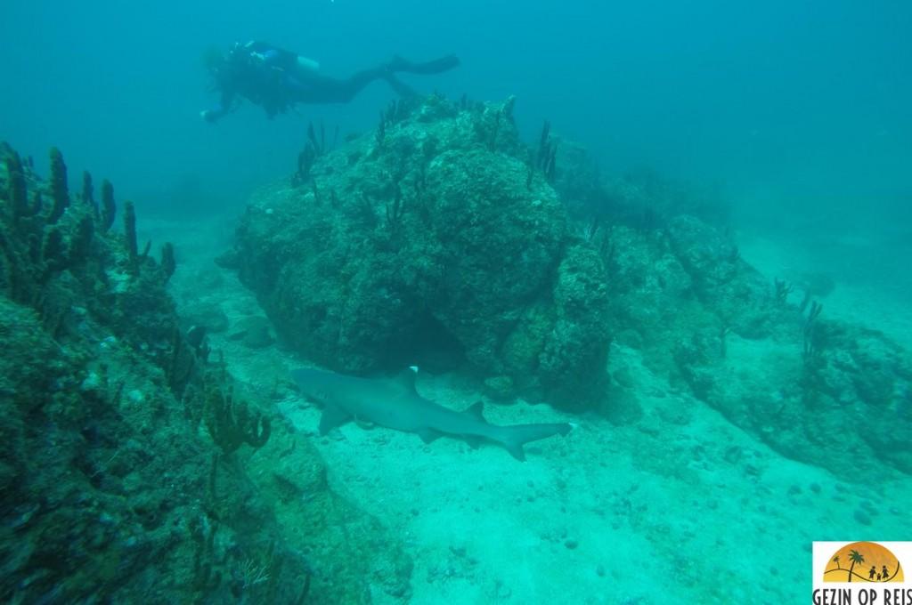 haaien panama