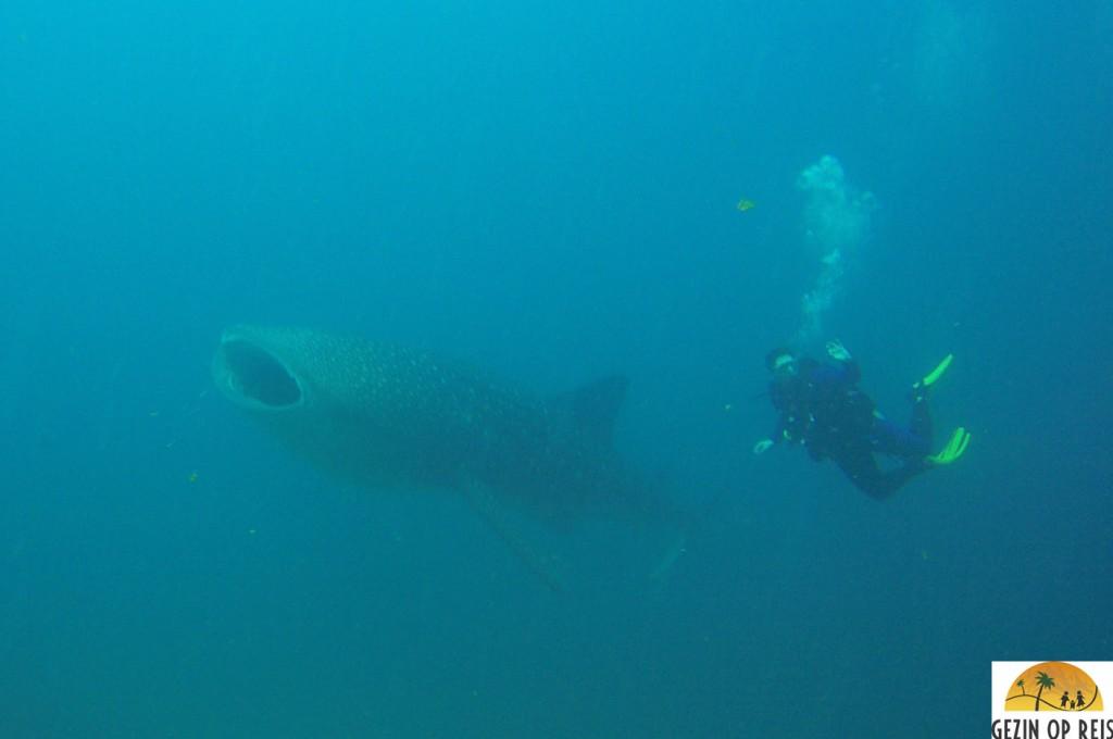 walvishaai duiken