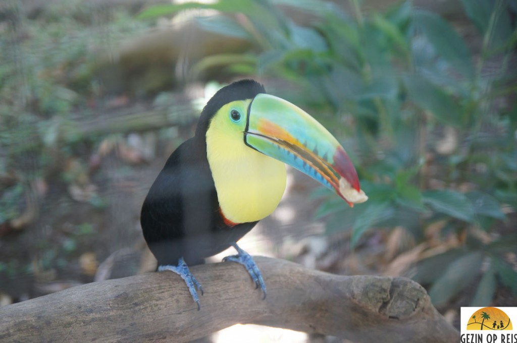 toucan panama