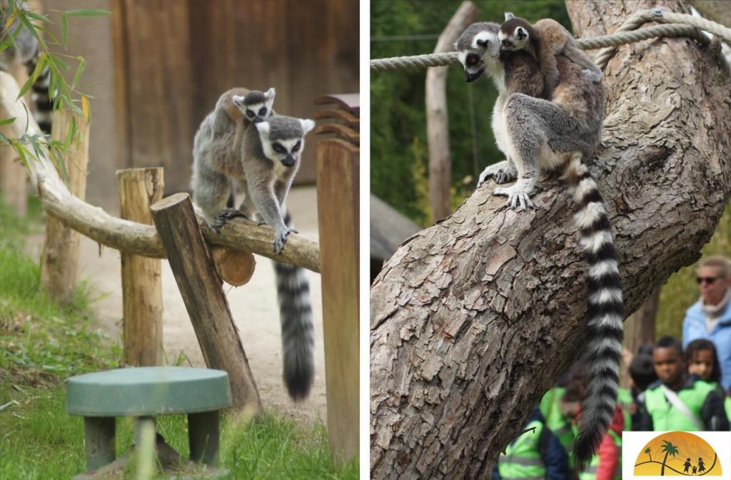 maki's dierentuin