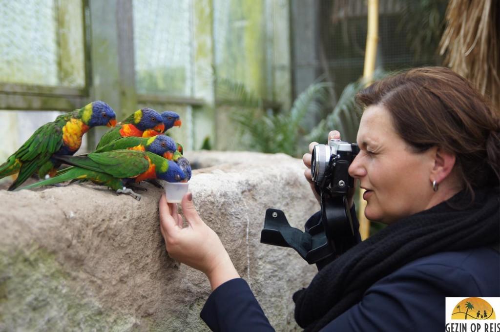 vogeltjes dierentuin
