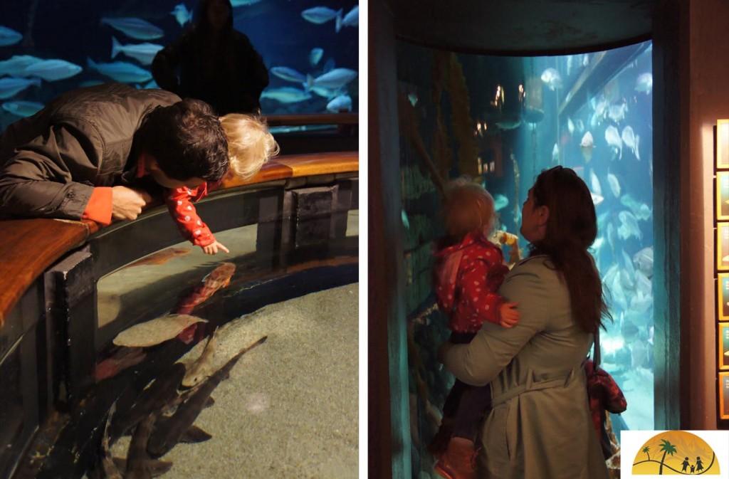 Aquarium Esbjerg