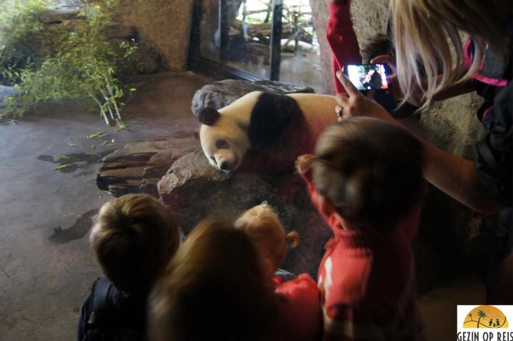panda belgie