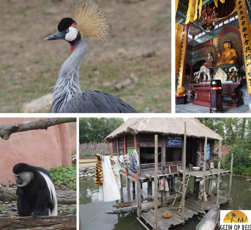 dierentuin belgie