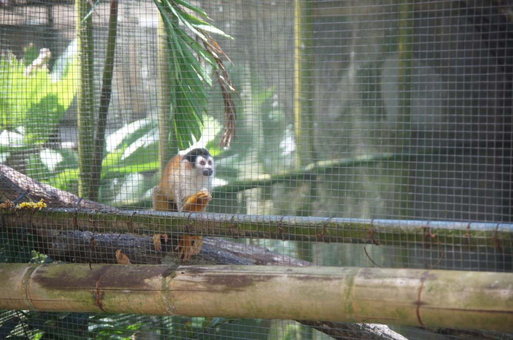 Summit Botanical Gardens en Zoo