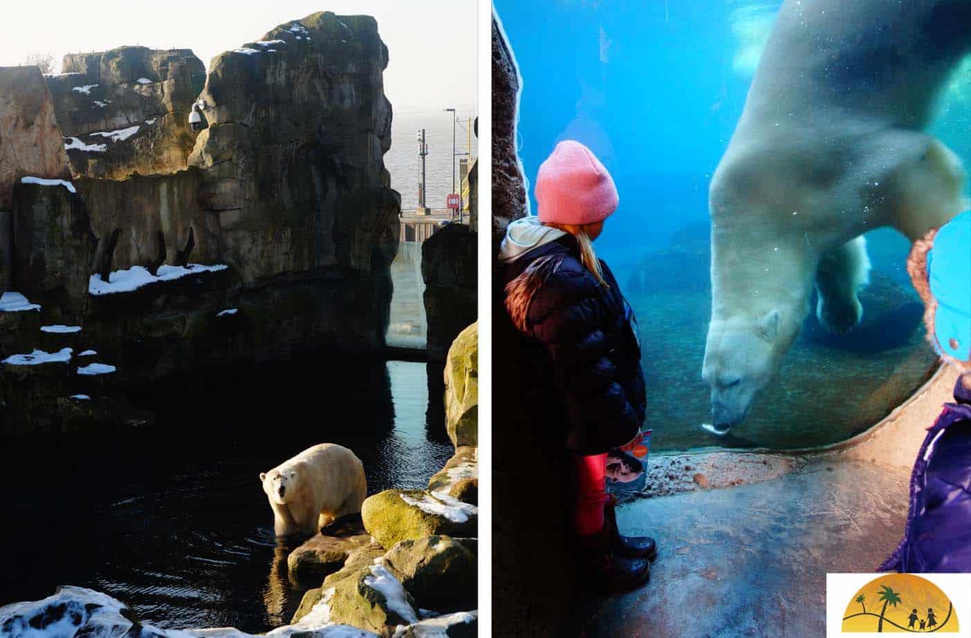 Bremerhaven ijsbeer