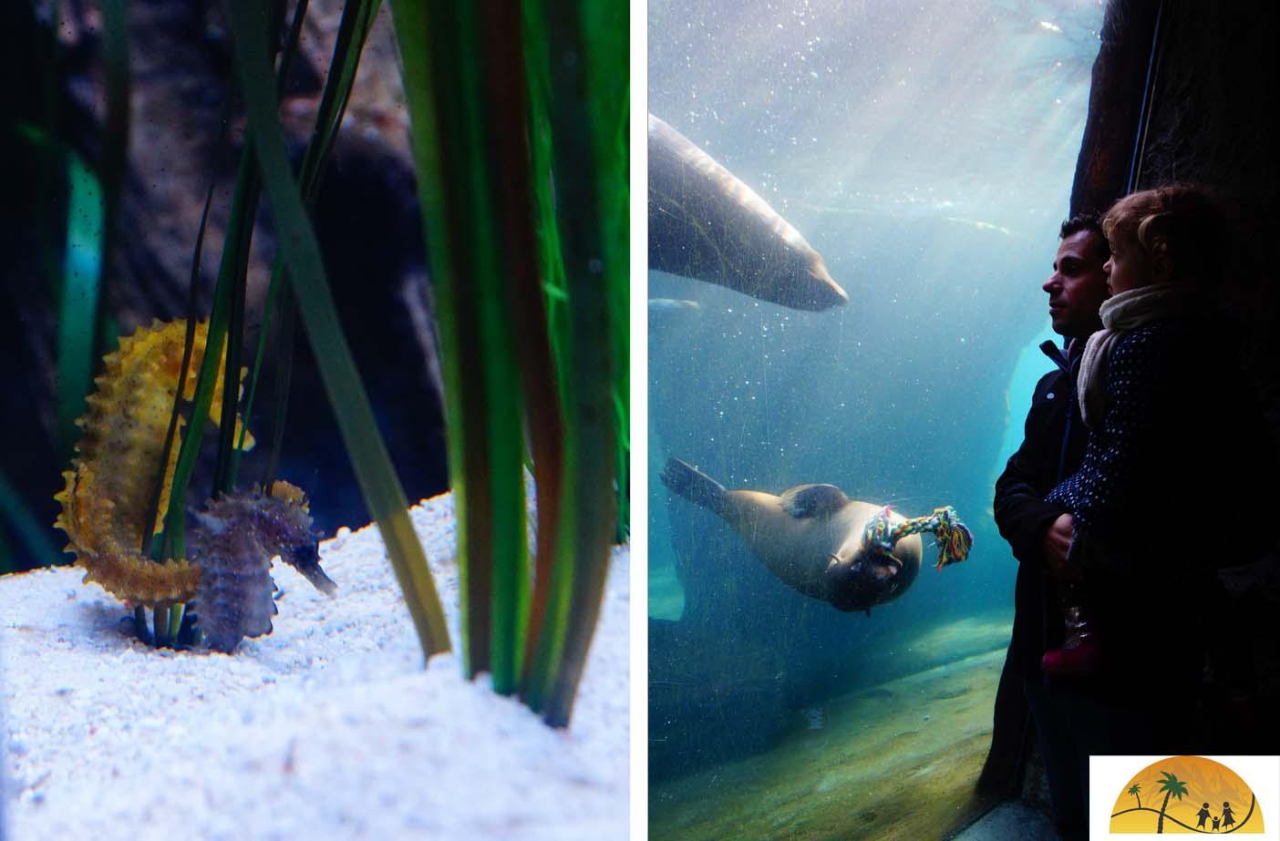 bremerhaven noordzee acquarium