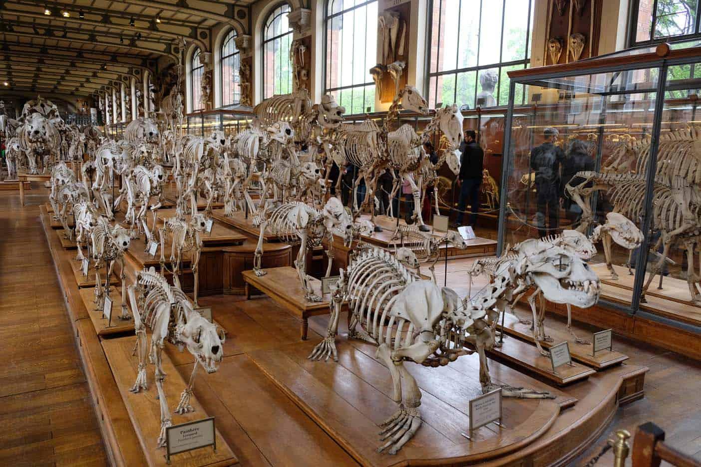 Galeriesd'Anatomie Comparéeet de Paléontologie