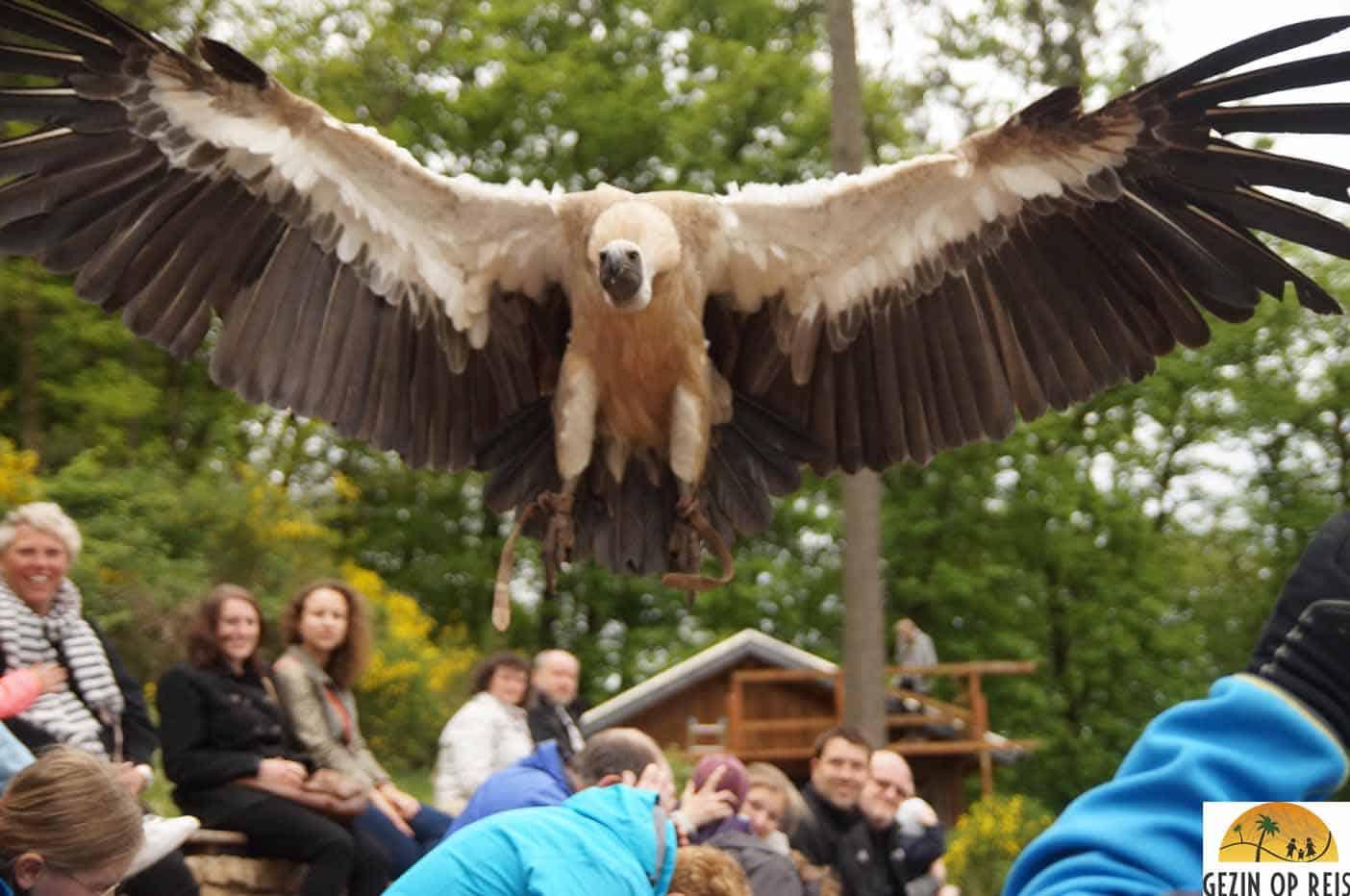 greifvogelpark-saarburg-kinderen