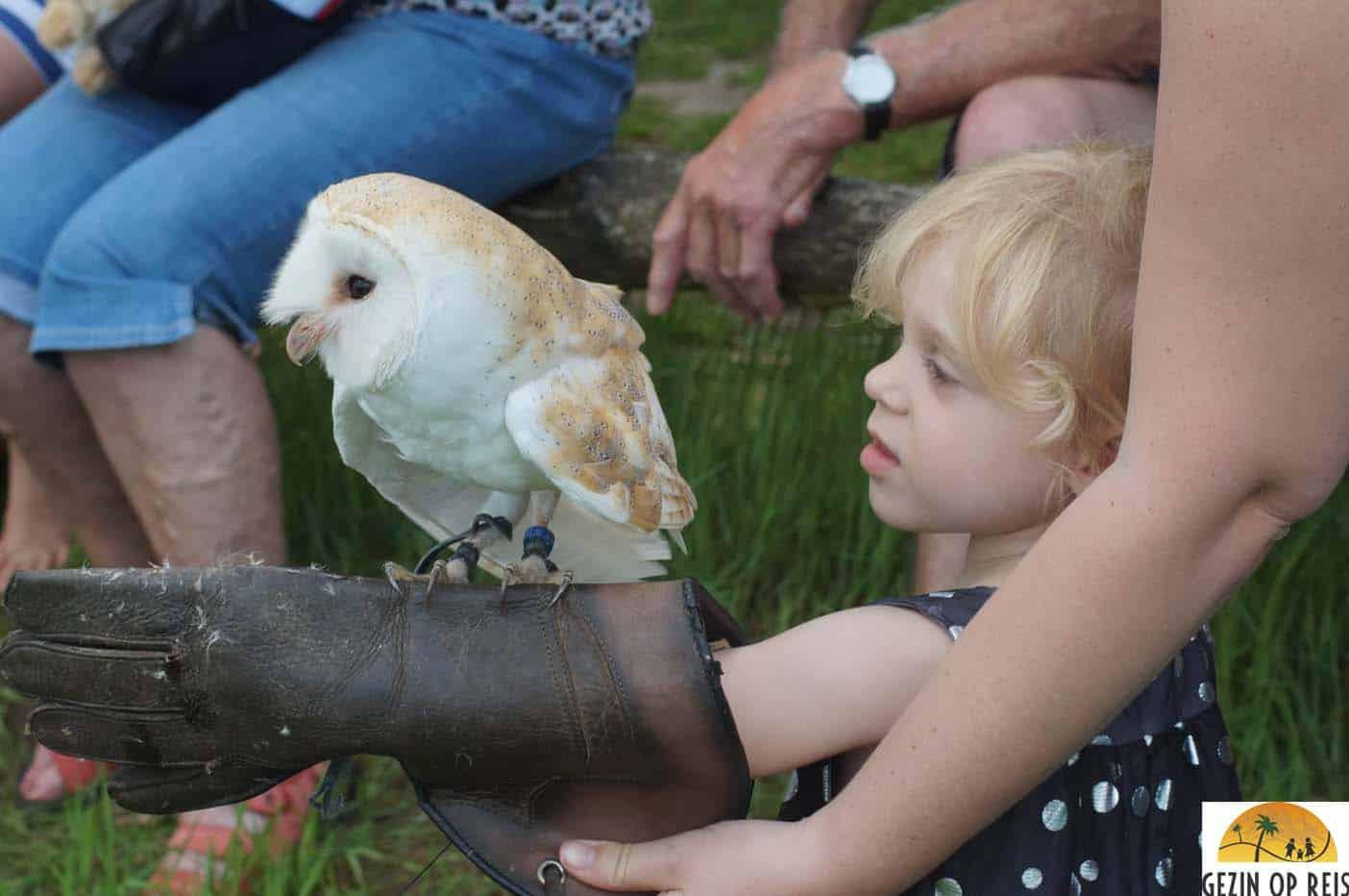 roofvogel show aardhuis Apeldoorn