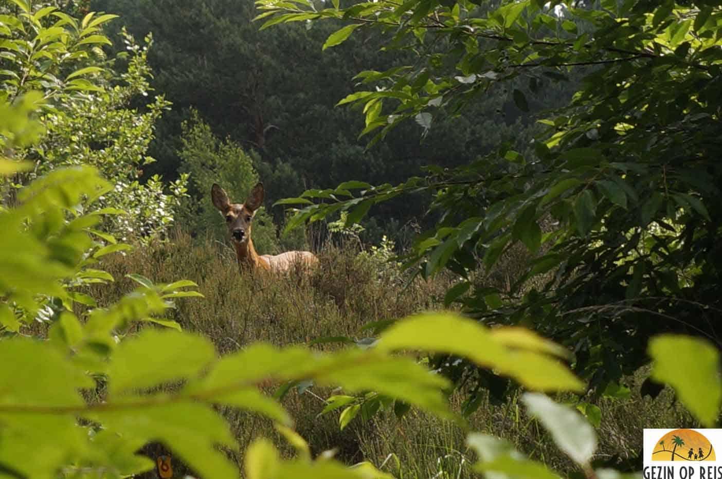 herten boswachters huisje staphorst