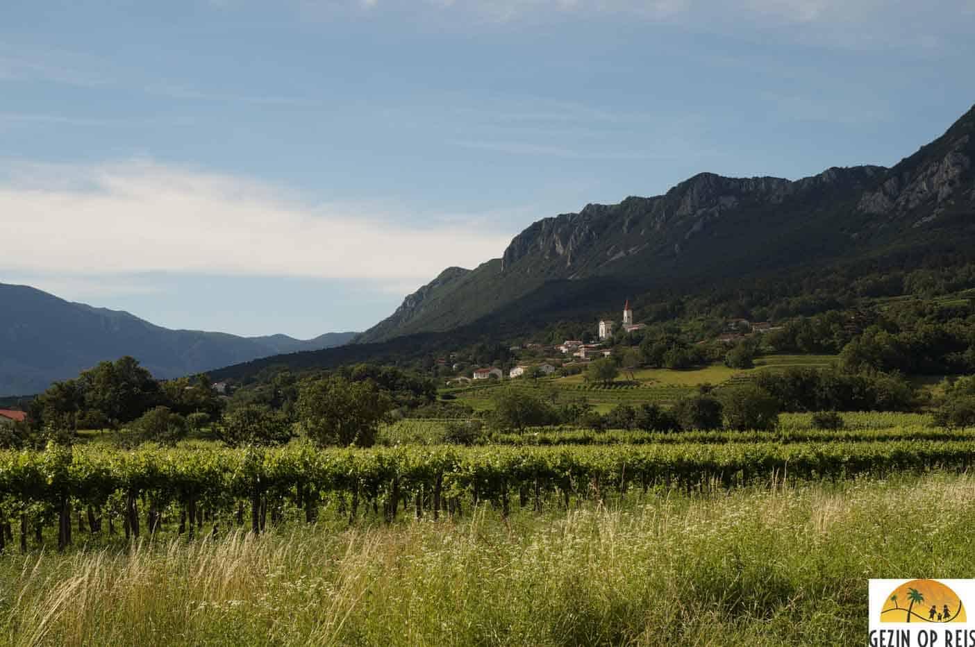 wijnvallei vipava