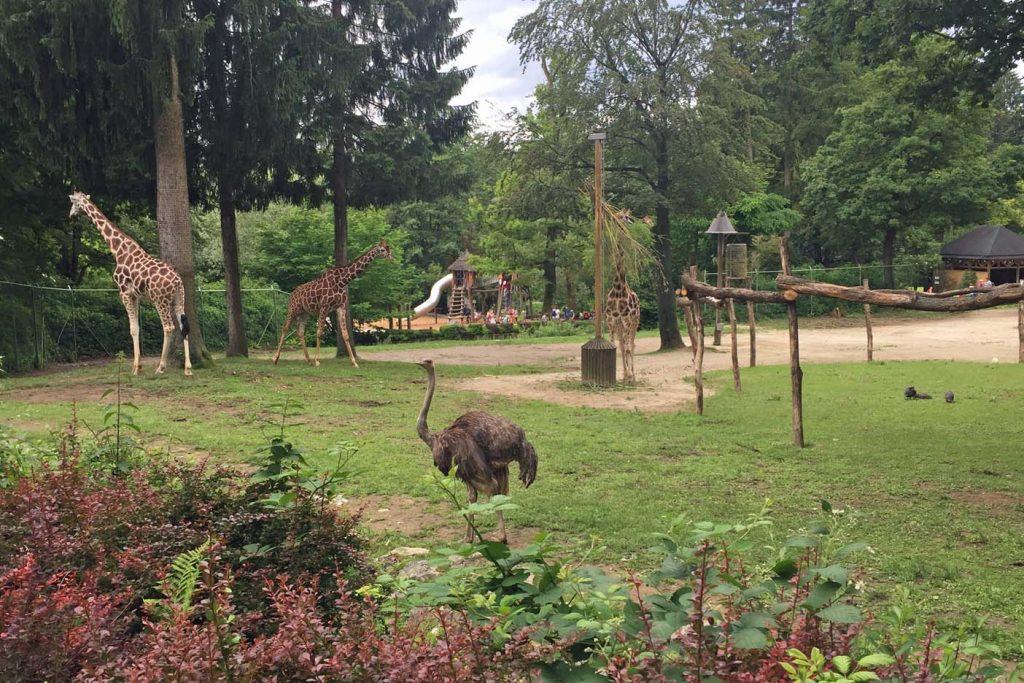 ljubljana dierentuin