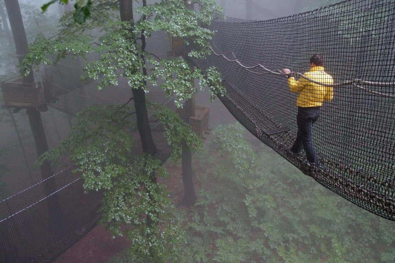 vogelsberg boomtoppen pad duitsland