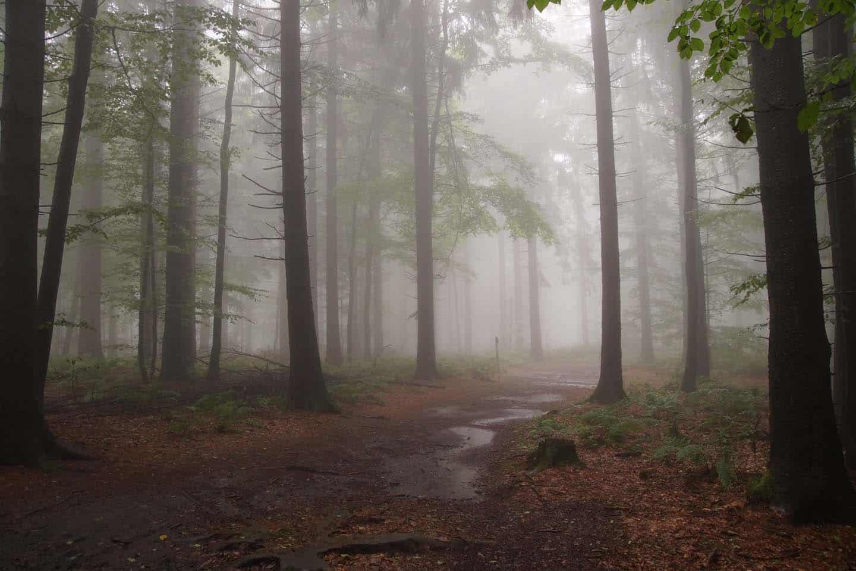 vogelsberg wandelen