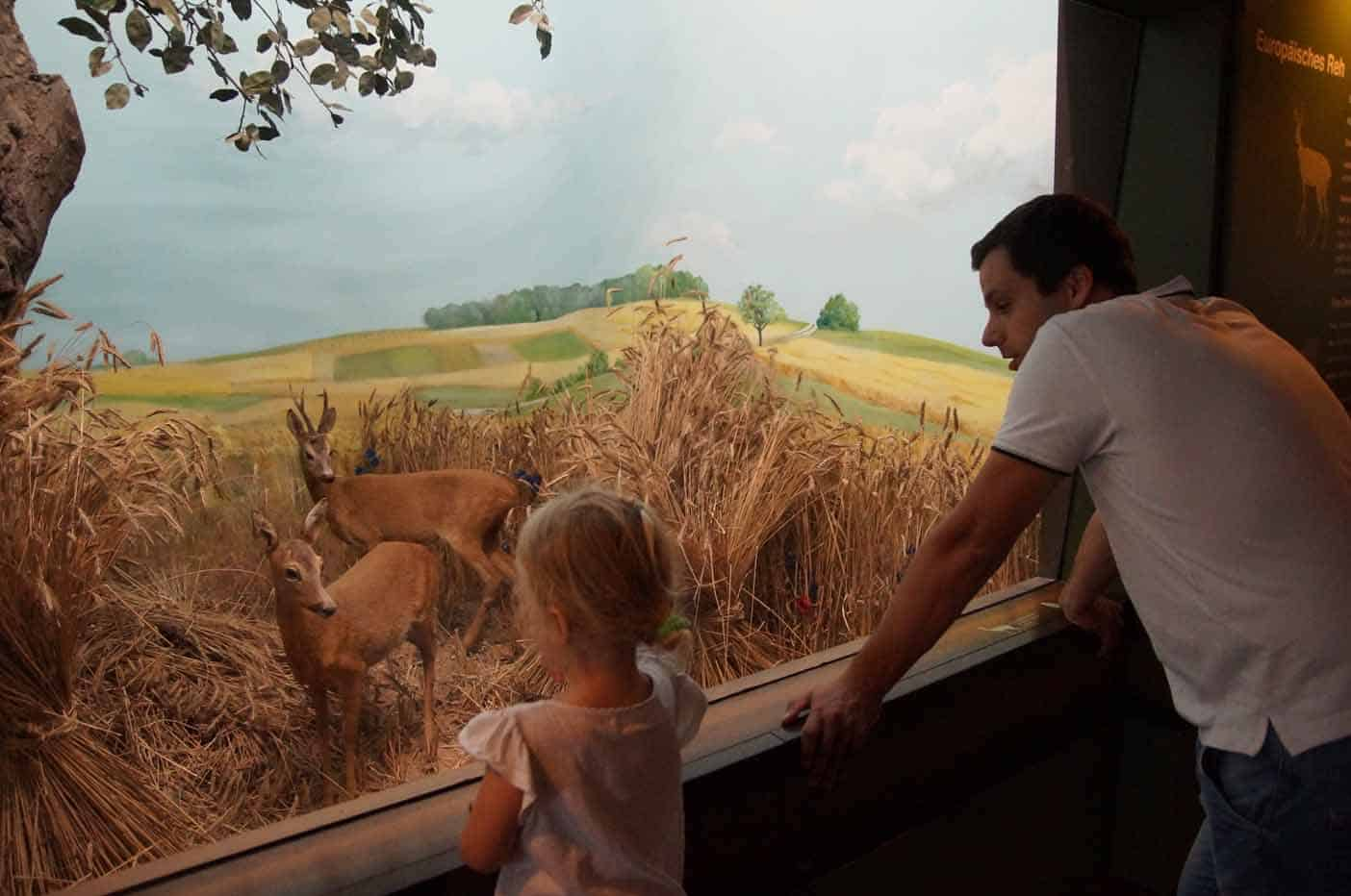 Natuurhistorische museum Frankfurt Senckenberg