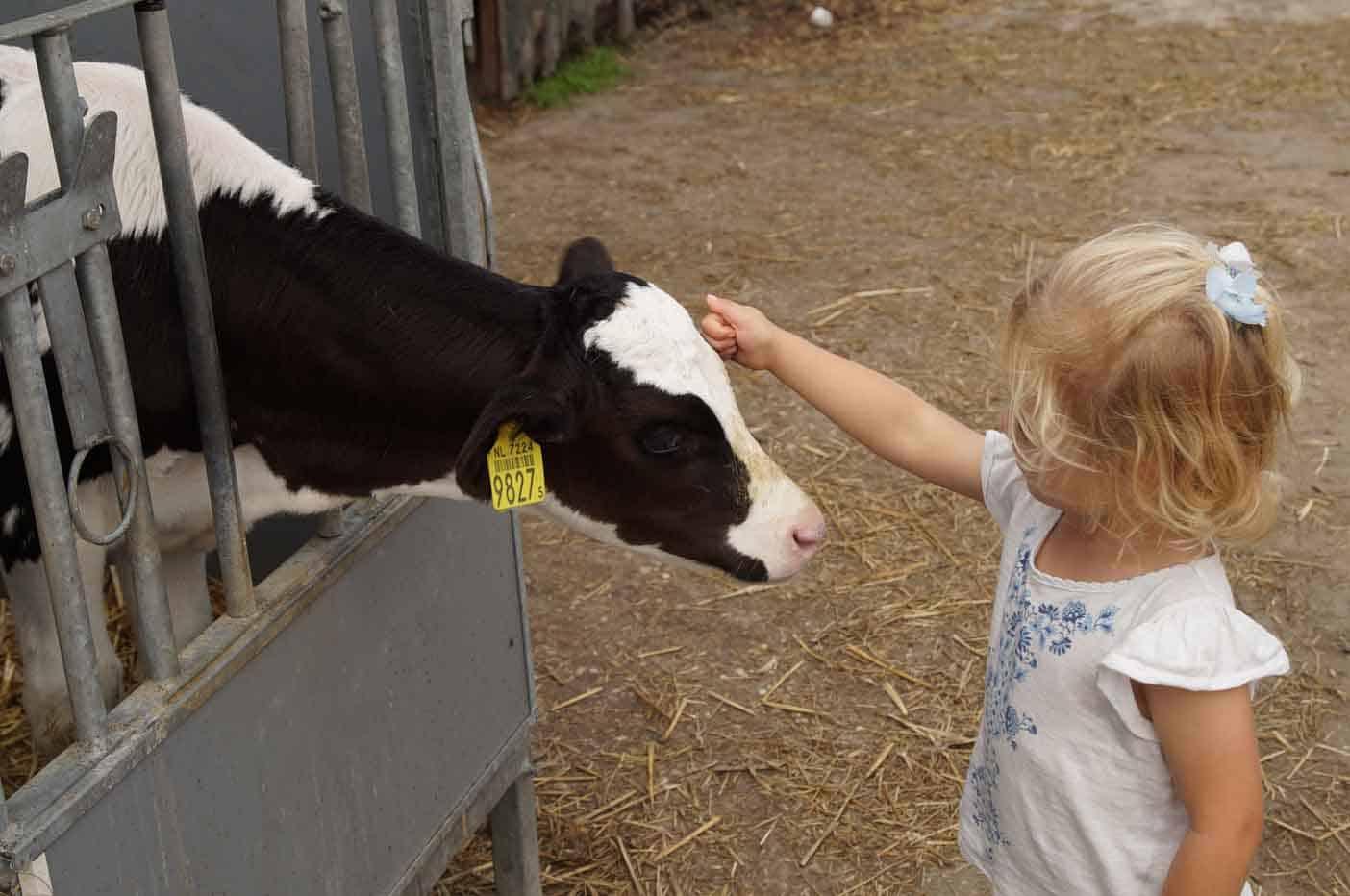 IJsboerderij Boere Iis