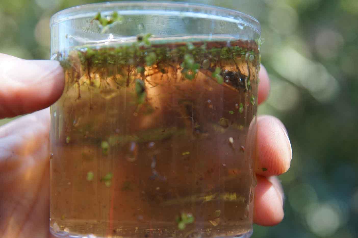 kikkerpad