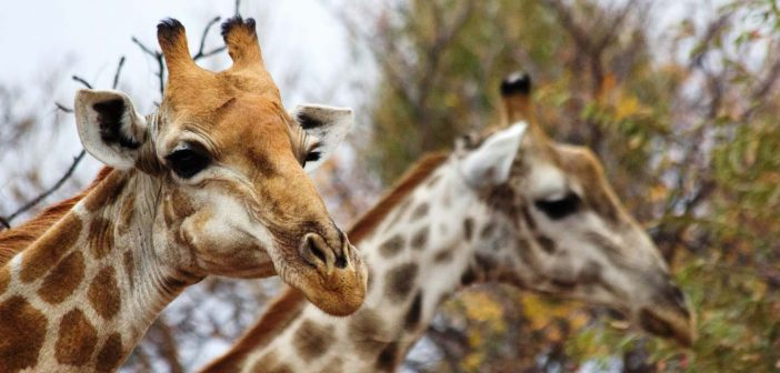 tuinroute safari
