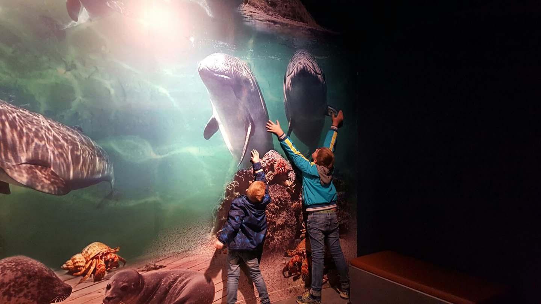 zeehonden denemarken