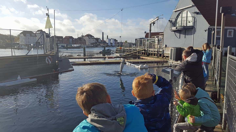 zeehonden denemarken Fjord&Baelt