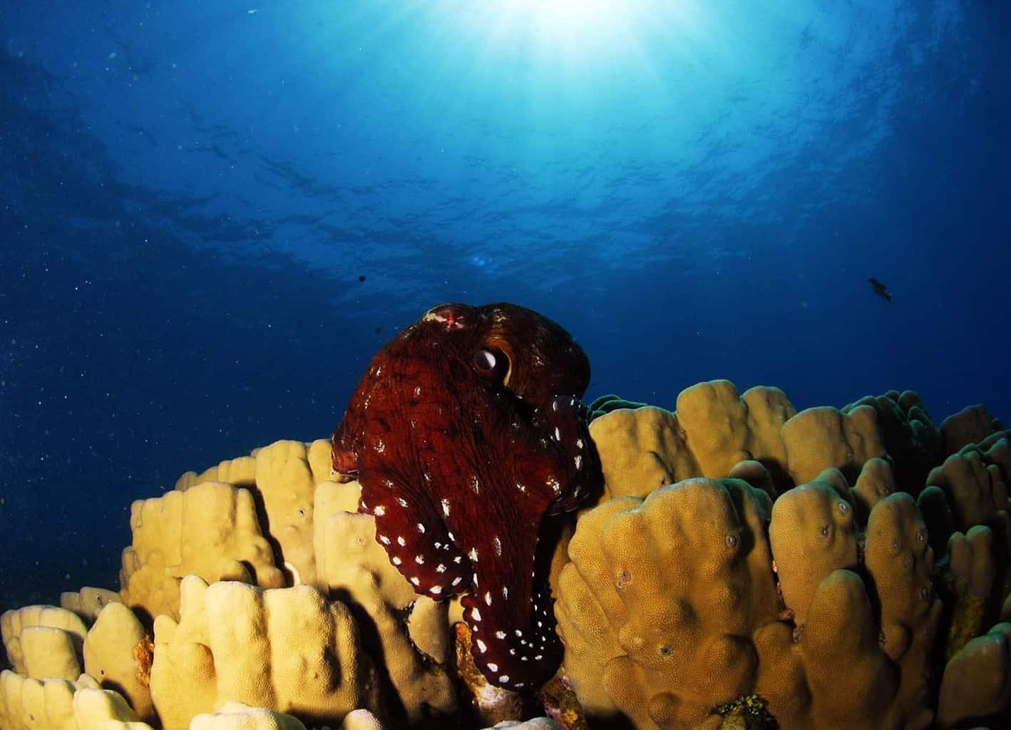 duiken in jordanie