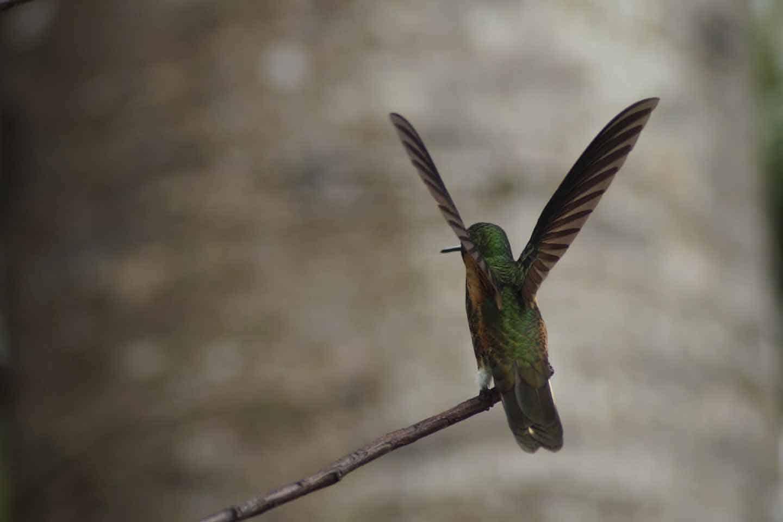 kolibriehuis cocora valley
