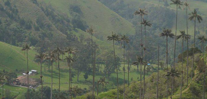 cocora vallei wandeling