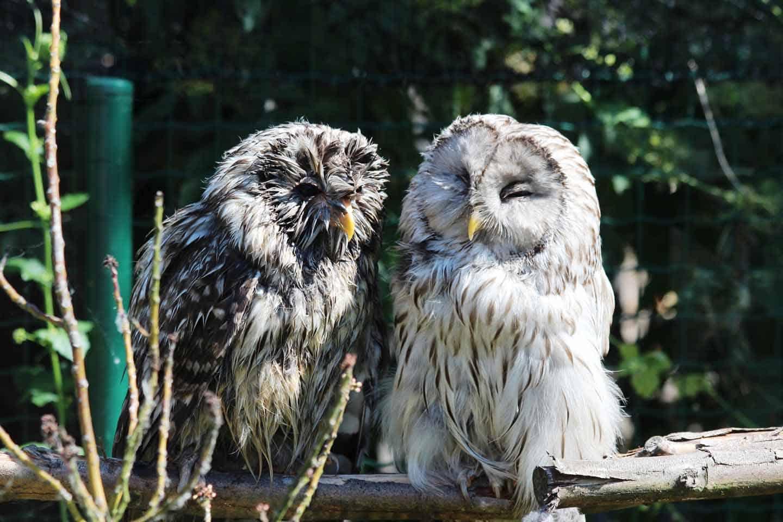 Parc-ZoologiqueFort-Mardyk