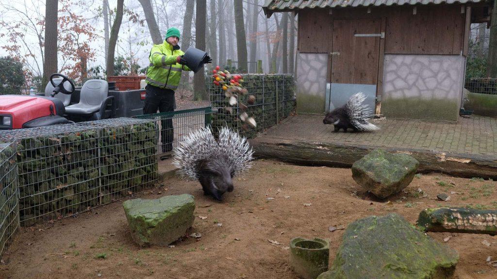 wildpark frankenhof in duitsland