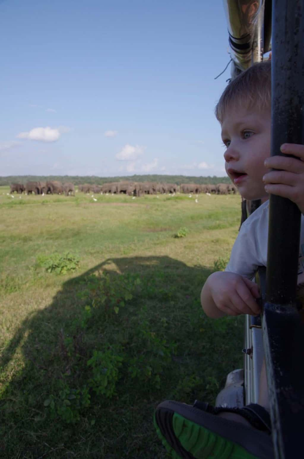 safari Sri Lanka Kaudulla