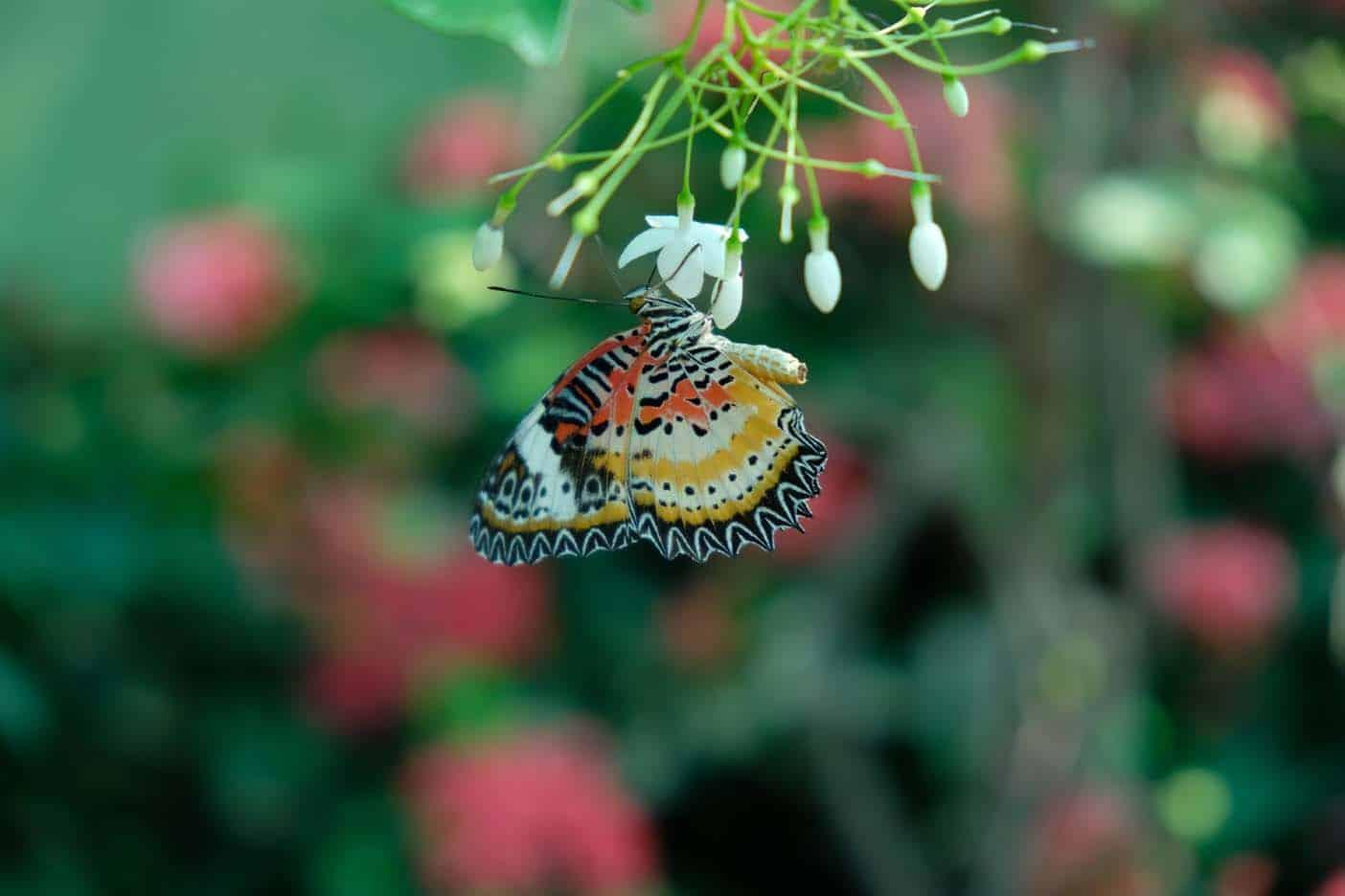 bangkok met kinderen vlindertuin