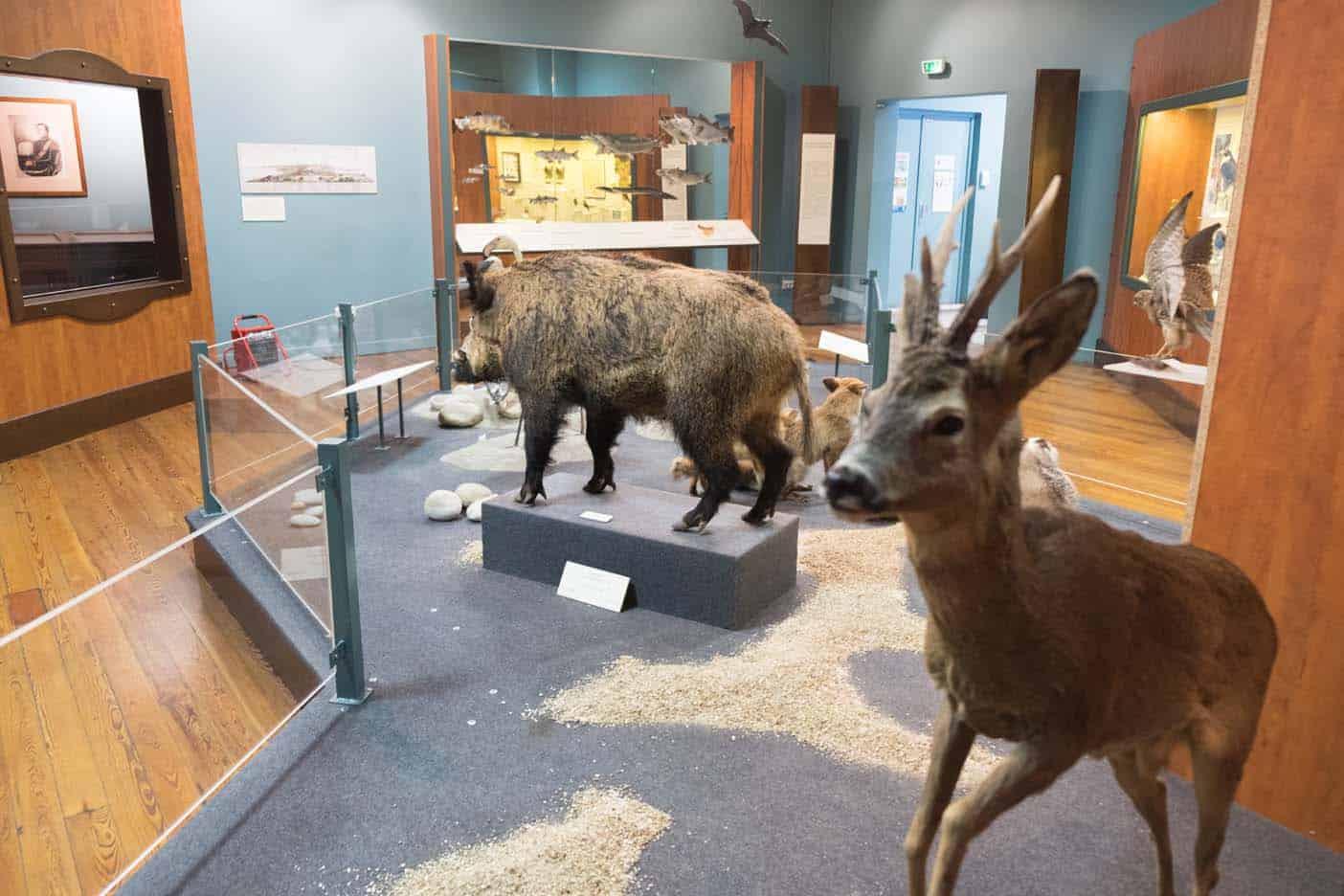 natuurhistorisch museum nice met kinderen
