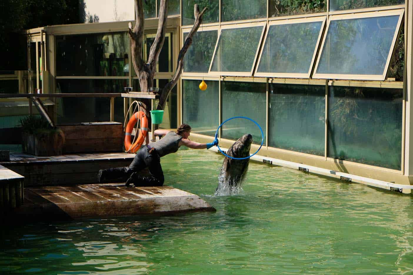 Zeerobben munster zoo