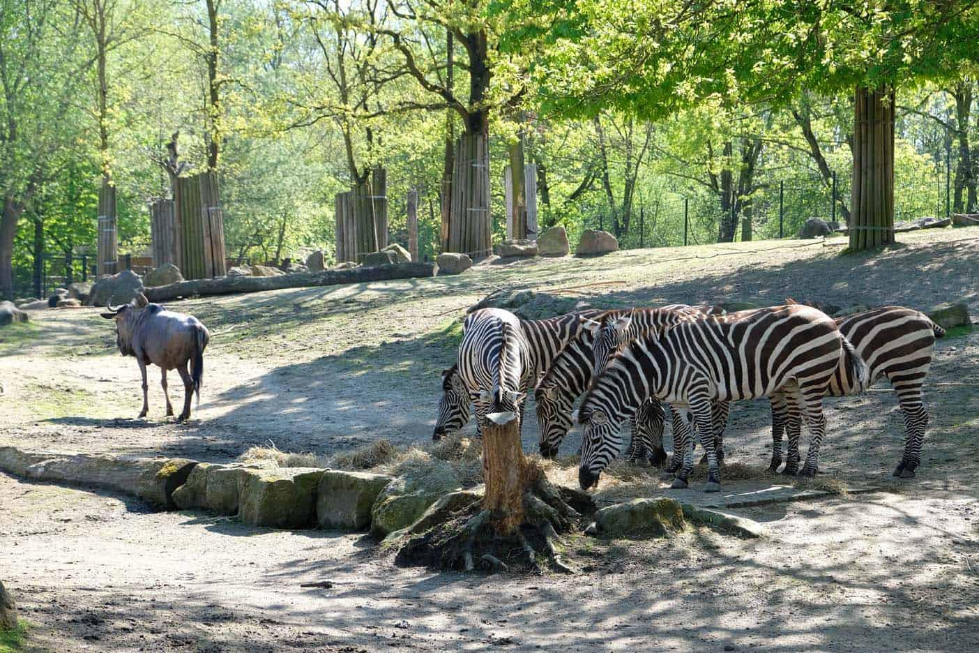 munster zoo