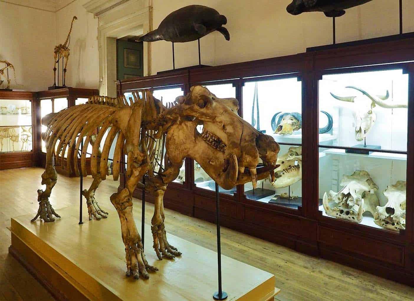 Science Museum Coimbra