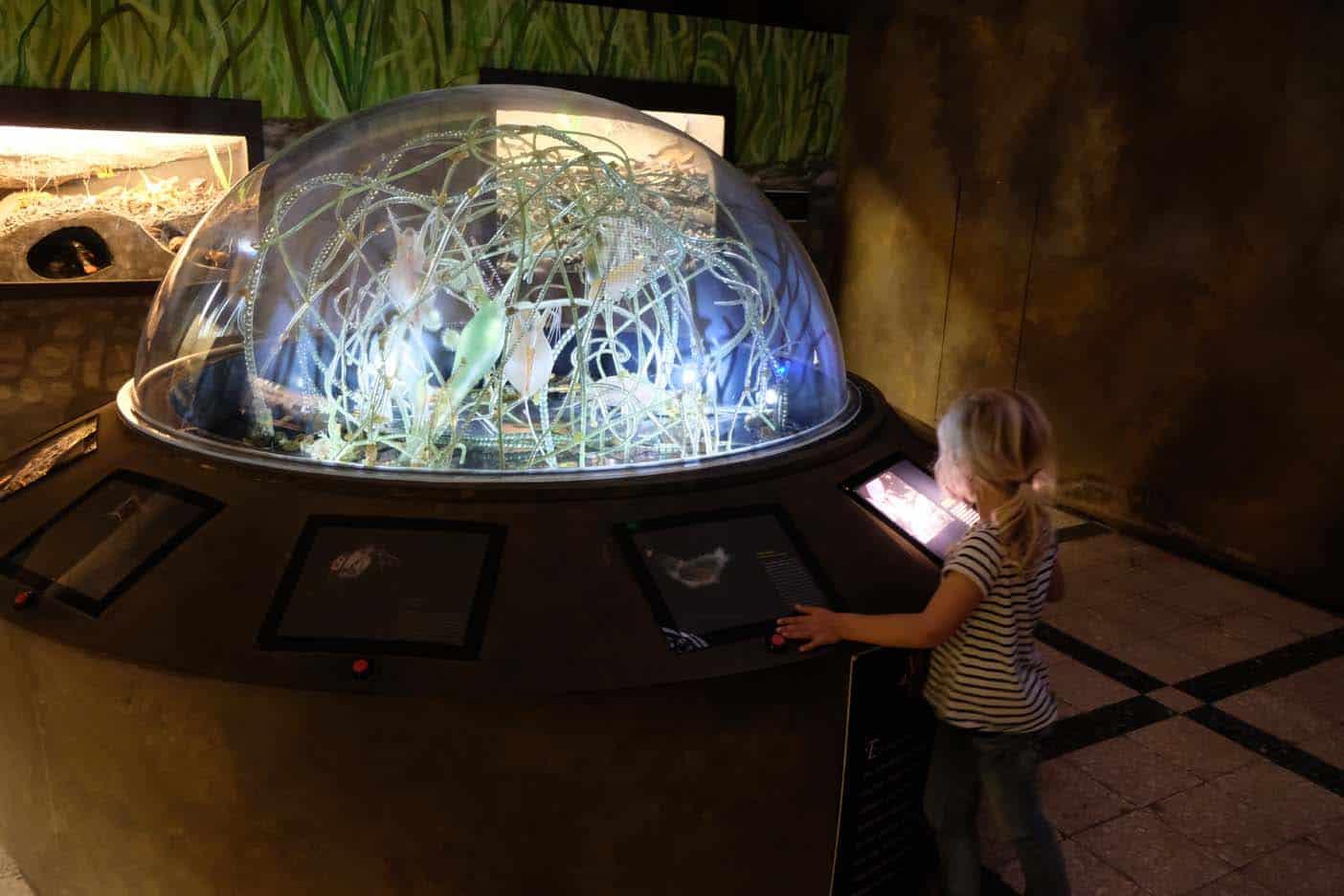 rome met kinderen zoological museum