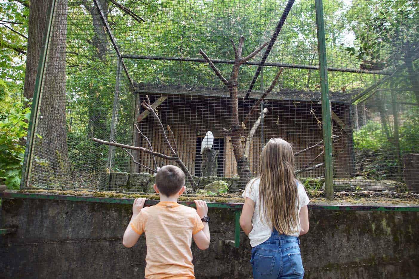 zwarte woud duitsland dierentuin