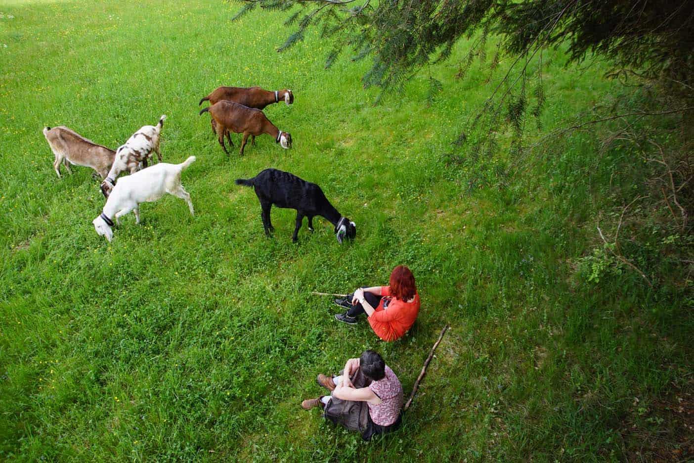 Zwarte woud wandelen met geiten