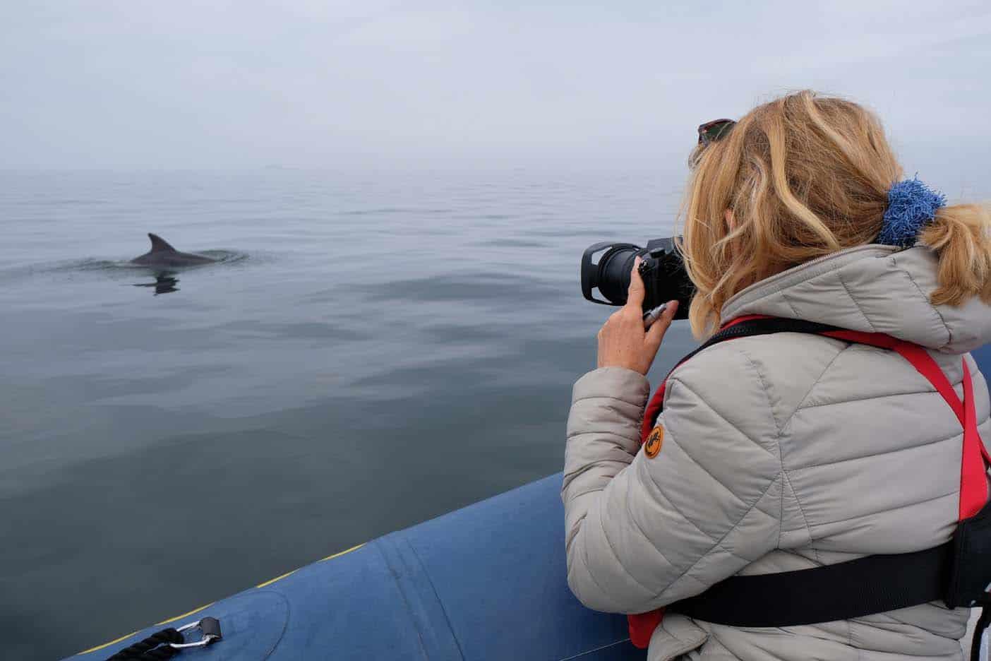 dolfijnen bretagne
