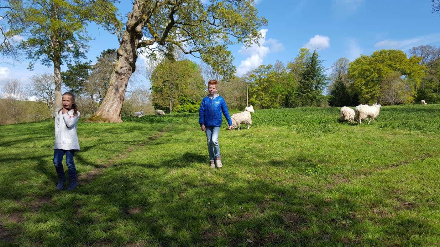 wandelen met schapen upper slaugther