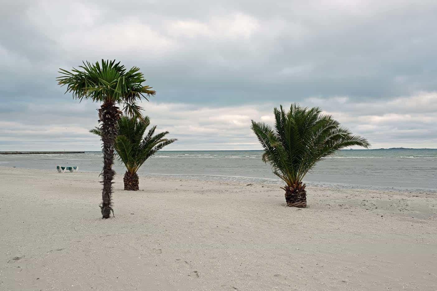 frederikshavn palmenstrand