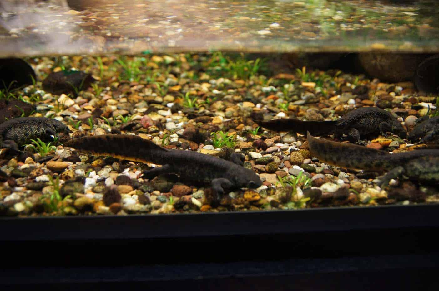 brussel aquarium
