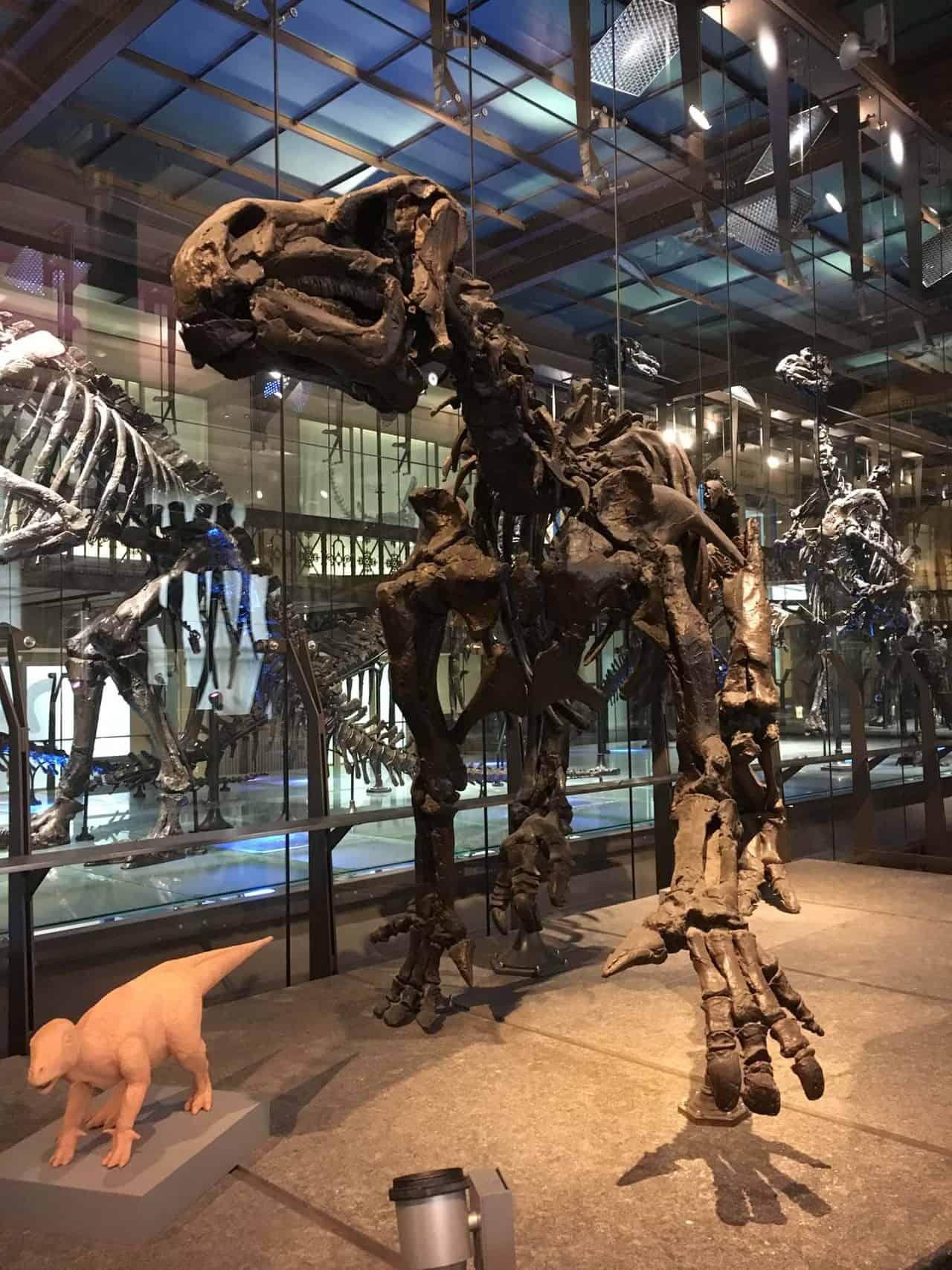 Brussel met kinderen museum natuurwetenschappen