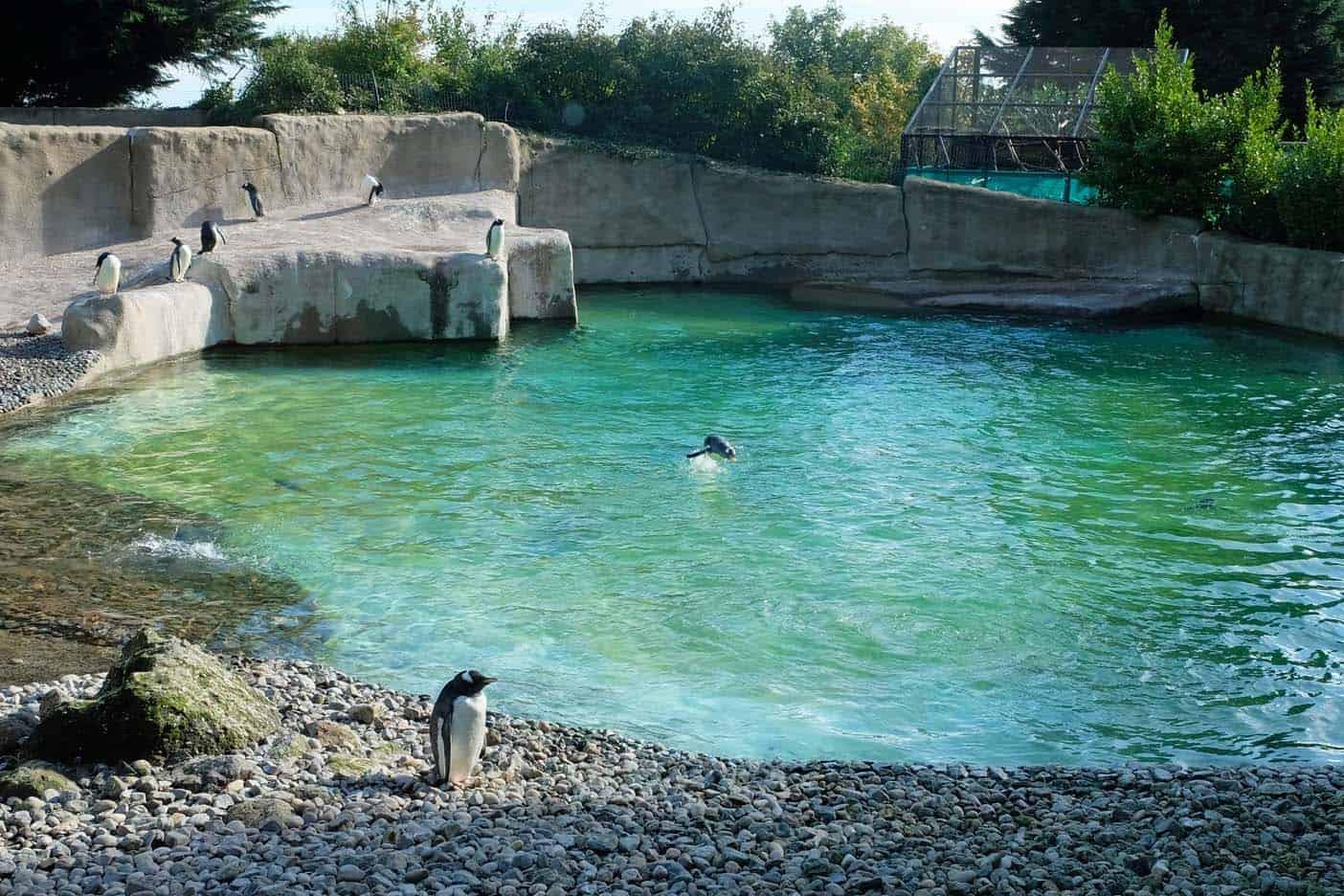 Belfast dierentuin