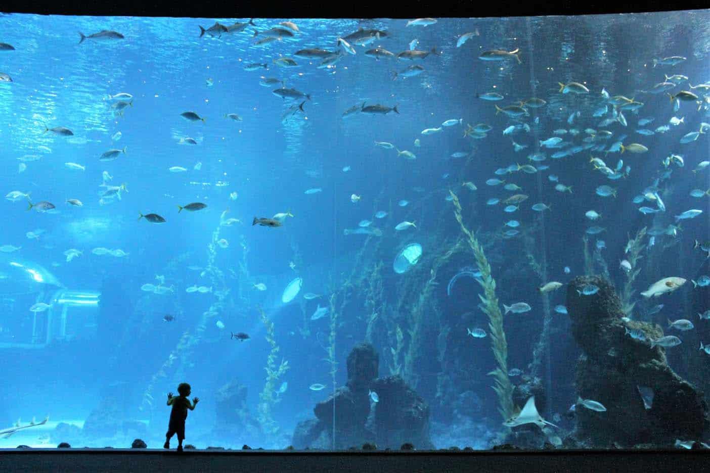 Aquarium La Palmas