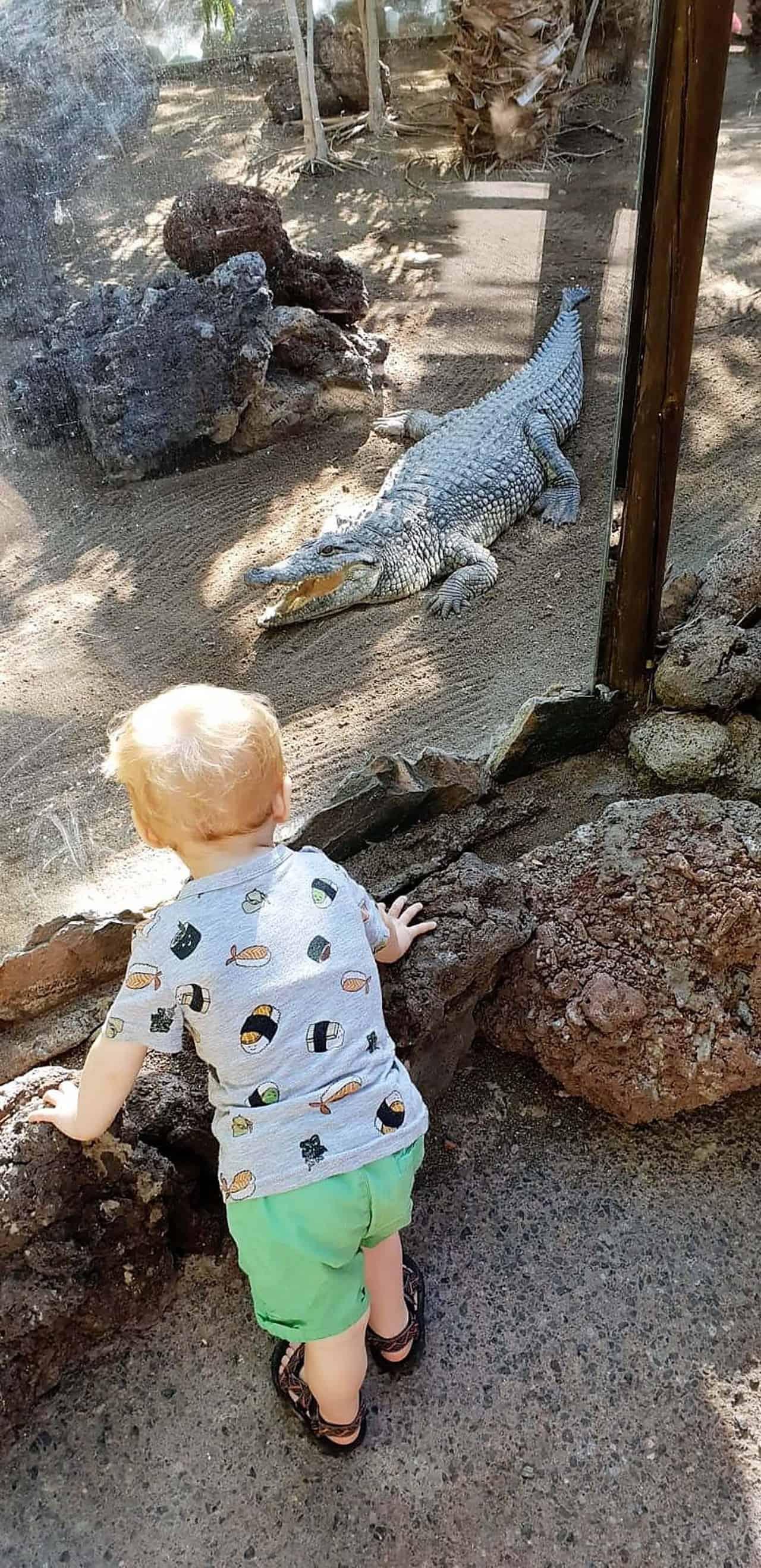 gran canaria met kinderen krokodillenpark